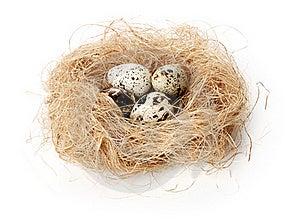 Huevos De Codornices Imagenes de archivo - Imagen: 17348074