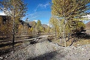 Poplar Trees Stock Photography - Image: 17351042