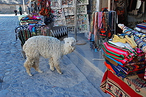 Baby Lama Near Souvenir Stand Royalty Free Stock Photography - Image: 17359897