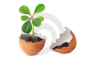 A Green Plant Grows In An Egg. Royalty Free Stock Photos - Image: 17365538