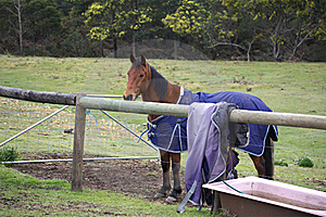 Horse With Winter Rug Stock Photos - Image: 17373583