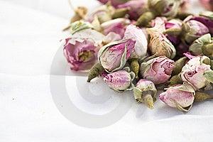 Roseblumen Auf Weißem Hintergrund Lizenzfreies Stockbild - Bild: 17373986