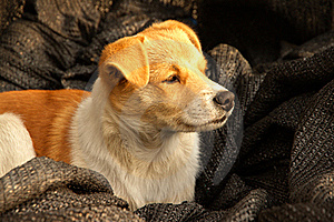 Doggy In The Morning Royalty Free Stock Images - Image: 17374789