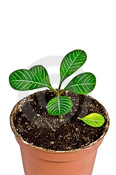 House Plant Royalty Free Stock Photo - Image: 17377405