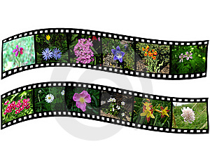 Pair Of Films With Images Of Flowers Stock Photo - Image: 17378750