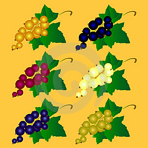 Currant Of Different Colors Stock Image - Image: 17394021