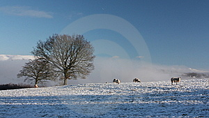 Snow Covered Field With Sheep Stock Photos - Image: 17394273