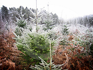 Frozen Forest Stock Images - Image: 1746194