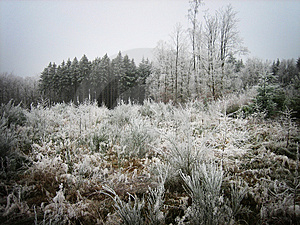 Frozen Forest Stock Photography - Image: 1746242