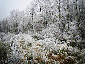 Frozen Forest Royalty Free Stock Photos - Image: 1746268