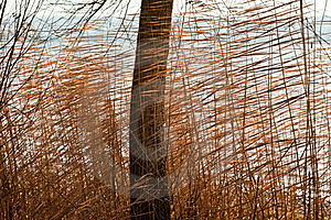 Reeds Stock Photos - Image: 17403993