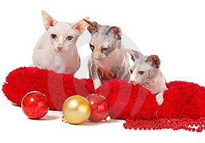 Christmas Cats Stock Photography - Image: 17405132