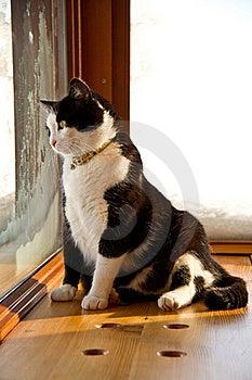 Cat Stock Image - Image: 17405981