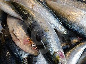 Fresh Fish Outdoor Paris Market Stock Photos - Image: 17406563