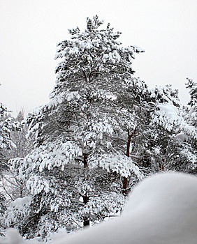 Winter Tree Stock Images - Image: 17407924