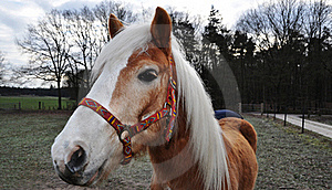 Brown Horse With Colorful Halter Royalty Free Stock Photo - Image: 17414445