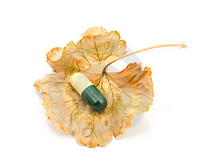Capsule On A Dry Leaf. Stock Photos - Image: 17415603