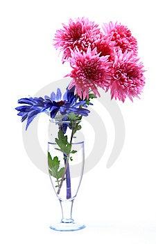 Fresh Flowers Royalty Free Stock Image - Image: 17416846