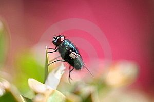 Fly Royalty Free Stock Photos - Image: 17419008