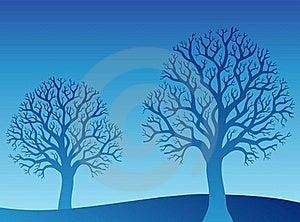 Zwei Blaue Bäume Stockfotografie - Bild: 17426302