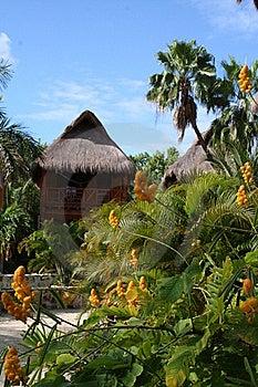 Palapa In Playa Del Carmen - Mexico Stock Photography - Image: 17448162