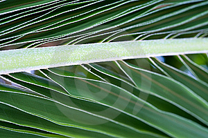 Palm Tree Leaf Macro Picture Royalty Free Stock Image - Image: 17458846