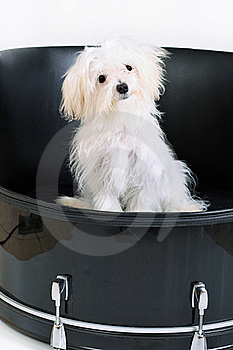 Music Maltese In Drum Royalty Free Stock Photography - Image: 17472437