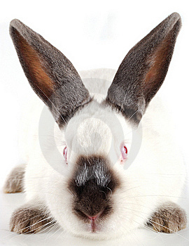 Muzzle Of A Rabbit Stock Images - Image: 17472814