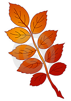 Leaf Of Dogrose,  Stock Photo - Image: 17479230
