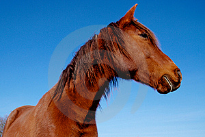 Horse Royalty Free Stock Photography - Image: 17503607