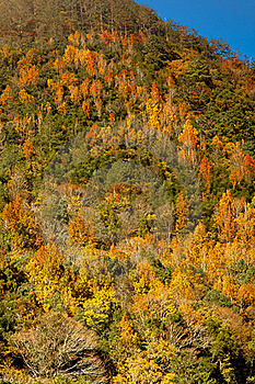 Mountain With Red Yellow Leaf Royalty Free Stock Photography - Image: 17506127