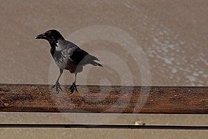 Crow Stock Photo - Image: 17514830