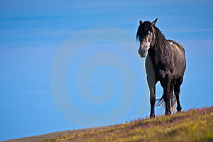 One Black Horse Against The Blue Sky Stock Image - Image: 17515031