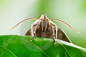 Moth Royalty Free Stock Images - Image: 17519099