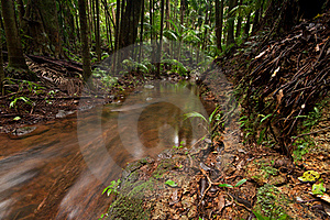 Rain Forest With Flowing Creek Water Stock Image - Image: 17524981