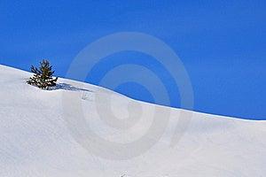 Tiny Tree Royalty Free Stock Photo - Image: 17536525