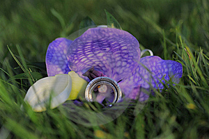 Two Wedding Rings On Violet Flower Stock Images - Image: 17540384