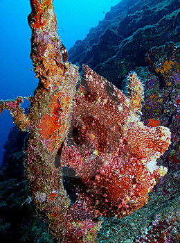 Frog Fish Stock Image - Image: 17546471