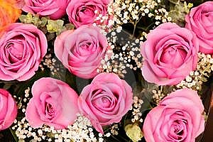 Pink Rosebuds Royalty Free Stock Images - Image: 17546979