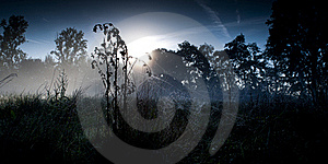 Morning Spiderweb Royalty Free Stock Image - Image: 17558926