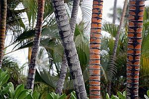 Palm Tree Trunks(Cocos Nucifera) Stock Image - Image: 17562581