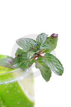 Mint Leaves Stock Photography - Image: 17562962