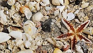 Starfish Royalty Free Stock Images - Image: 17563039