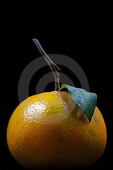 Orange Detail Royalty Free Stock Photos - Image: 17563328