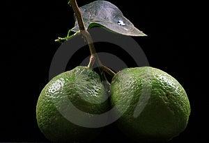 Fresh Lime Stock Image - Image: 17563341