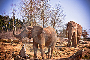 Elephant Royalty Free Stock Image - Image: 17572816