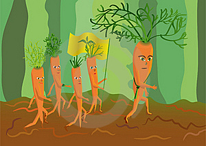 Army Of Genetically Modified Carrots Royalty Free Stock Photo - Image: 17575915
