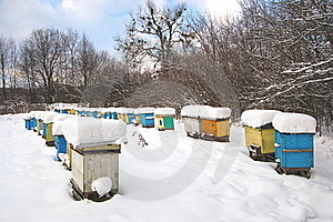Apiary In Wintertime Stock Photography - Image: 17576282