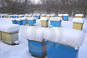 Apiary In Wintertime Stock Images - Image: 17577024