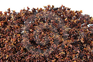 Wild Raw Buckwheat Stock Photos - Image: 17580543